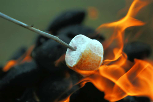 Campfire and Marshmallow on a Stick